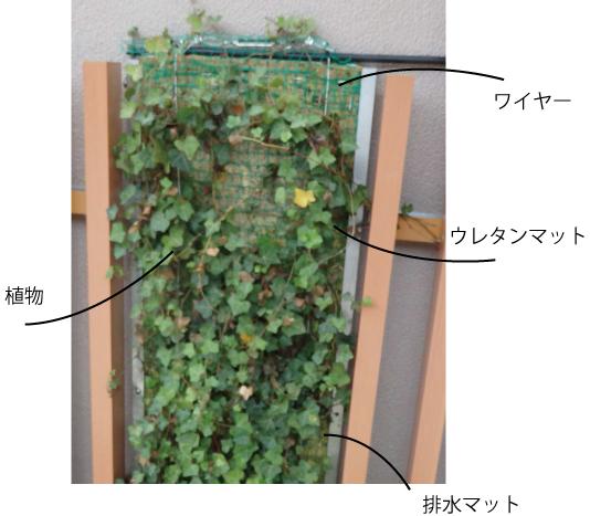 壁面緑化特徴